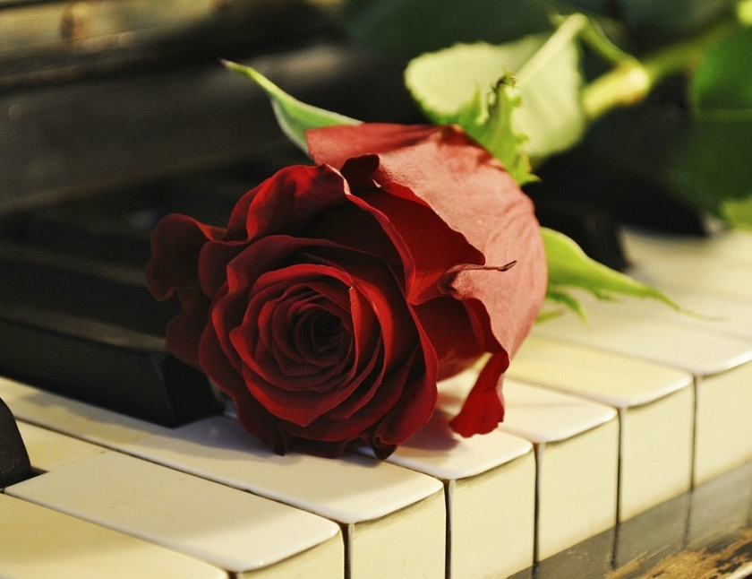 1562437509rose-on-the-piano-1280x720-wallpaper.jpg